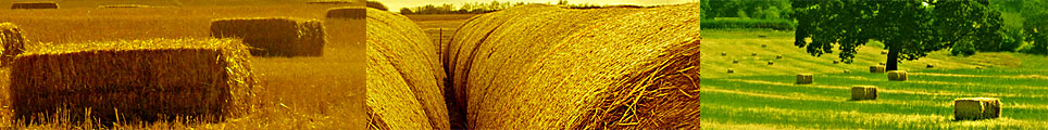 Save Hay - whether it's Large Square Bales, Small Square Bales, or Round Hay Bales!